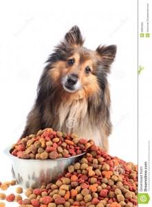 A Happy Dog kutyatápot minden eb kedveli