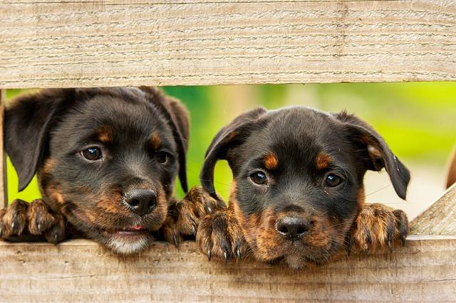 Ízletes kutyatápok